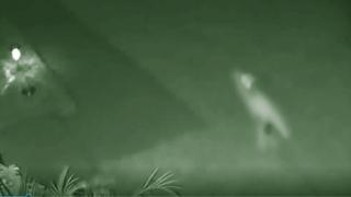 Динозавр во дворе частного дома