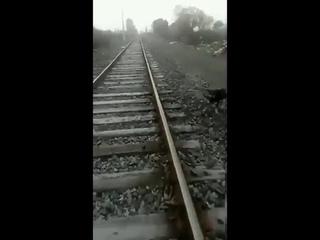 Машинист был вынужден остановить поезд, когда увидел привязанного к рельсам пса