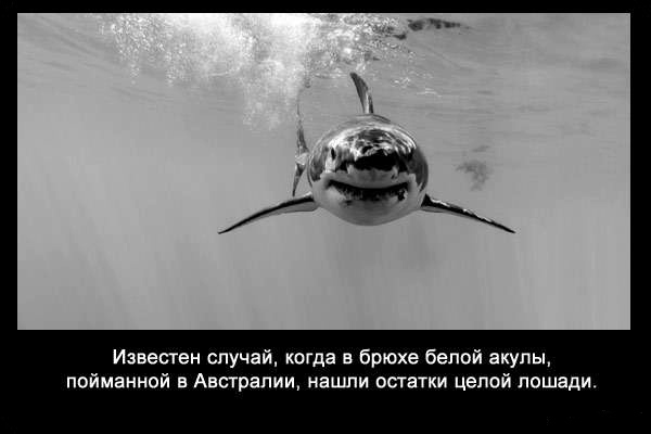 валтея - Интересные факты о акулах / Хищники морей.(Видео. Фото) BgQnWA_jYJM