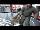 Макс Новосёлов против Питбулей людоедoв! Прокусил сквозь защиту