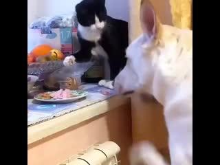 - На тебе, ешь! Только меня не выдавай