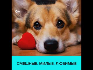 Всемирный день домашних животных  Москва 24