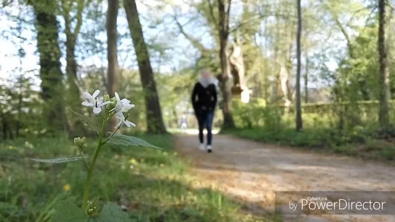 Васек Весна_HD 720p