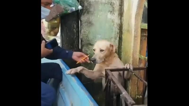 Спасение собаки во время наводнения в Эквадоре кажись песик все понял