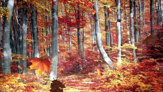 Autumn walk in the woods, falling leaves, crow and woodpecker  - ambient sounds  - 5 hours -  HD