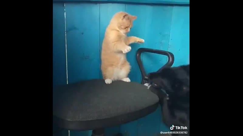 Унизь собакена