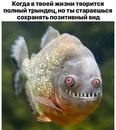Родион Газманов фотография #32