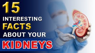 15 Interesting Facts About Your Kidneys (HINDI) | Unknown Facts | Kidney Treatment in Ayurveda