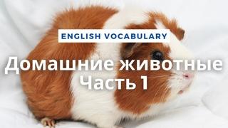 Домашние животные - Часть 1 / Vocabulary: Domestic animals - Part 1