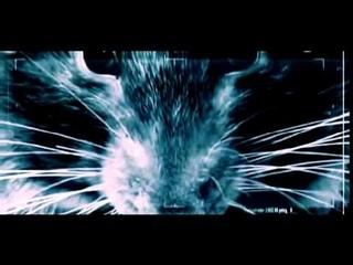 Крысы. Подземный разум.