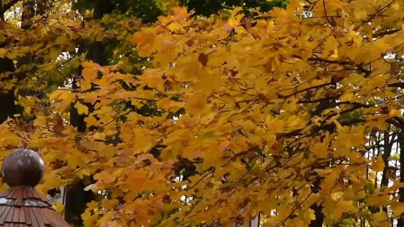 Осенние патриаршие сады mp4