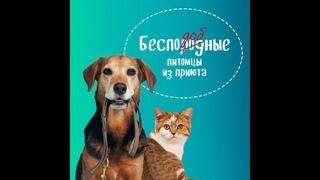#7 Лекция «Самые распространенные болезни собак?», «Домовой ликбез»,