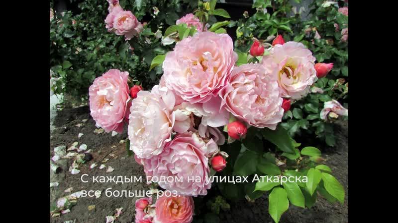 Розы Аткарска