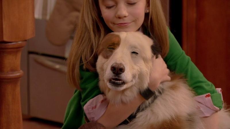 Собака точка ком - Сезон 1 Серии 1, 2, 3