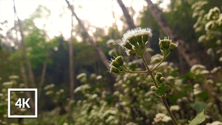 🌸  Calm Spring Ambience In A Flower Forest 🌼  | Morning Birds & Nature Sounds | 4K ASMR Ambience