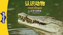 Meet the Animals 3: Nile Crocodile (认识动物 3:尼罗河鳄鱼) | Level 2 | Chinese | By Little Fox