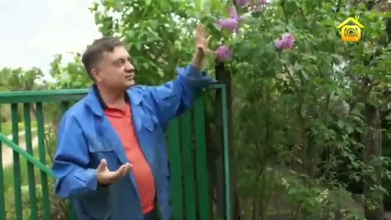 Сирень. Советы от Андрея Туманова