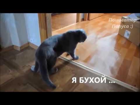Говорящие коты Лучшая подборка №13