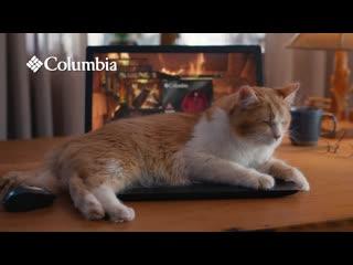 Теплый котик в каждой точке