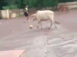Vaca do tabajara fc