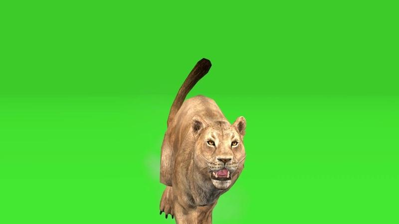 Animal leona con rinoceronte green screen смотреть онлайн без регистрации