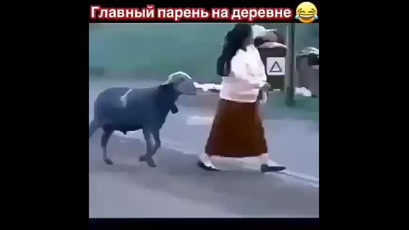 Казахшаның қошқары шығып кетіпті ®