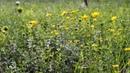 В поле, травы, сверчки, солнышко, музыка, звуки природы, пение птиц, релакс, природа, место силы