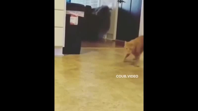 Кот наркоман горе в семье