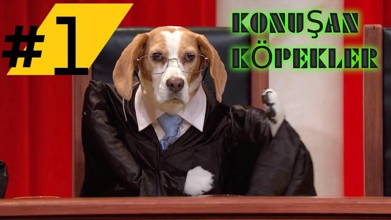 Konuşan Köpekler 1 - En Komik Köpek Videoları