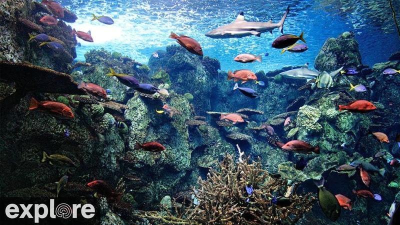 Вид с камеры в аквариуме на тропическом рифе
