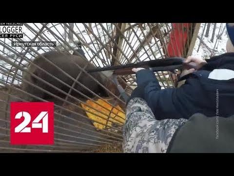 Губернатор Левченко пристреливался по беззащитным животным вместе с внуком Россия 24