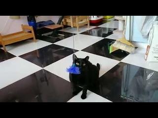 Кошка Нора