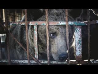 В Оренбургской области после публикации RT спасли трёх медведей