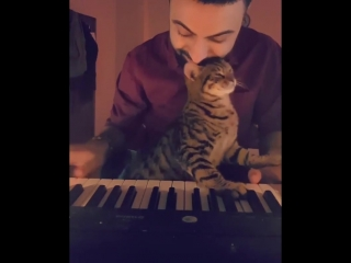 Estasi felina ...