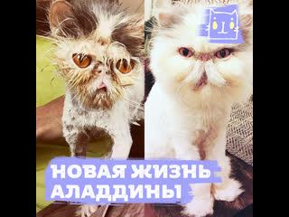 Лысая бездомная кошка превратилась в пушистую красавицу