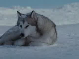 ЖИВОТНЫЕ Видео про настоящую любовь и дружбу!!! (из фильма Белый плен)