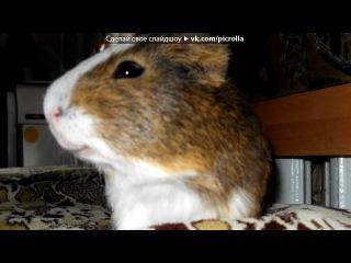 «мої тварини» под музыку Вормикс [] - Я веселый таракан я бегу..бегу..бегу..)))xDDD. Picrolla