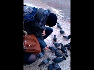 Глупые голуби и злой Витя