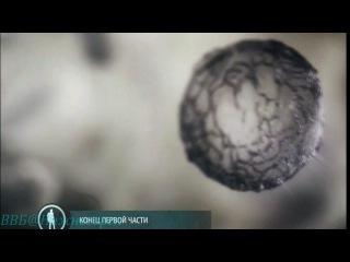 BBC Чудеса жизни Что такое жизнь Документальный 2012