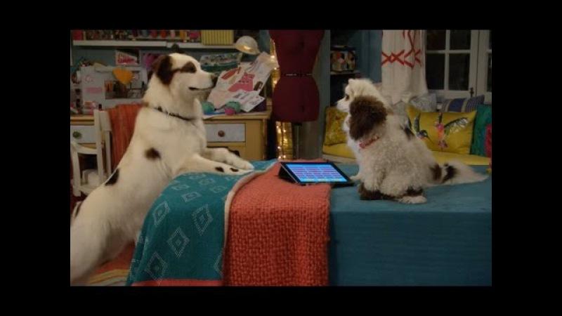 Собака точка ком Сезон 3 Серия 19