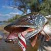Jaxon-Fishing