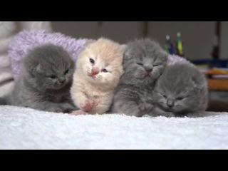 Four cute, fluffy, newborn kitten