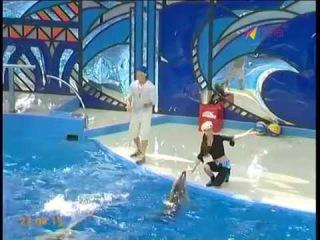 Сочинцы могут принять участие в съемках телешоу с дельфинами