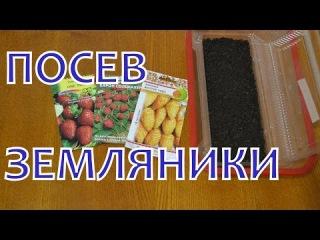 Выращивание ЗЕМЛЯНИКИ (КЛУБНИКИ) из семян. ПОСЕВ на рассаду