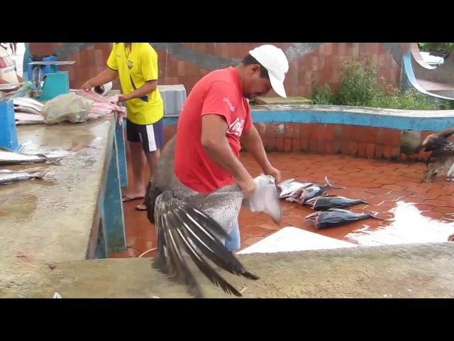 Fishmarket Puerto Ayora Отдай