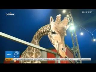 Украина за цирк без животных