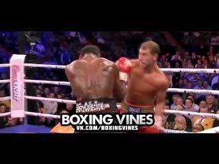 Bute vine (boxing vines) l