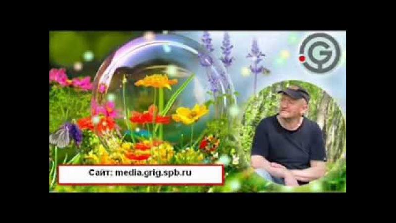 Григорий Рейнин Лекция в Нижнем Новгороде Объекты