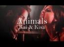 Kai kisa animals