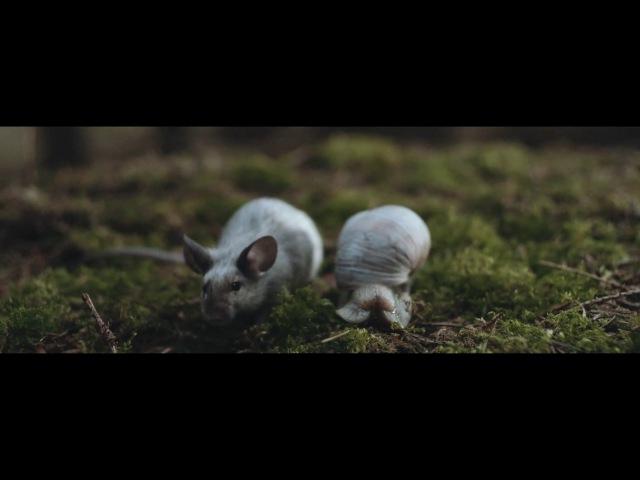 Alt J In Cold Blood Official Video